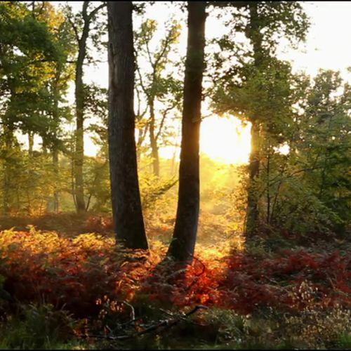 A quoi servent nos forêts ? |