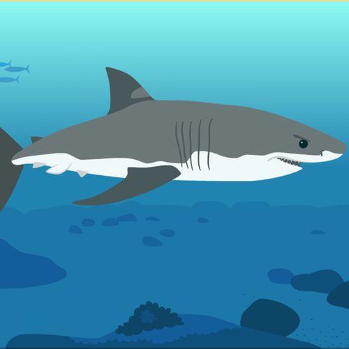 Le requin | Florence Blanquart  (auteur)