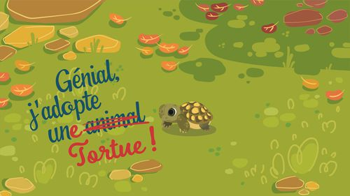 Génial, j'adopte une tortue ! | Florence Blanquart  (auteur)