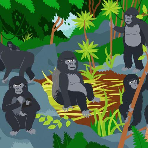 Le gorille | Florence Blanquart  (auteur)