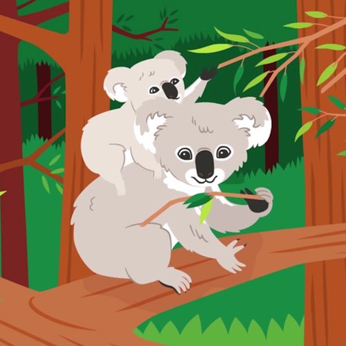 Le koala | Florence Blanquart  (auteur)