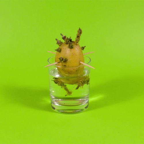 Comment faire pousser un monstro-patate ? | Grégoire Lemoine  (auteur)