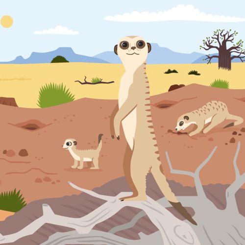 Le suricate | Florence Blanquart  (auteur)